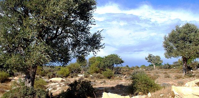 Деревня Зейтинлик: легенда об оливковом дереве