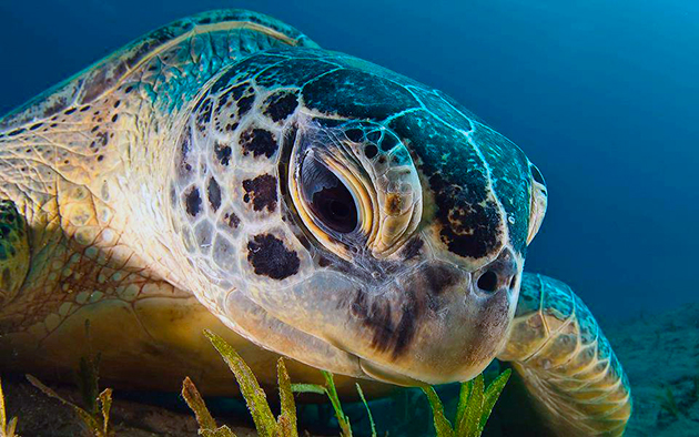 Черепахи на Северном Кипре
